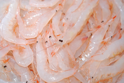 White shrimp