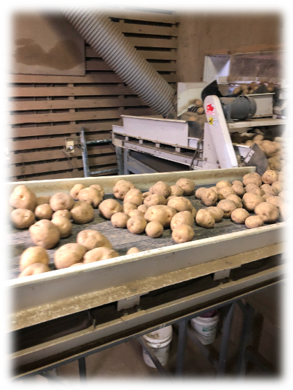 We purchase, sort and pack potatoes.